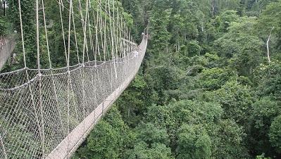 Canopy Walk Way In Kakum National Park
